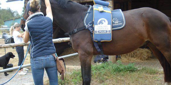 Ganzheitliche Pferdephysiotherapie